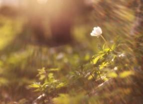 Mk 5, 21-43: Nadzieja w Jezusie