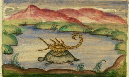 Opowieść o żółwiu i skorpionie