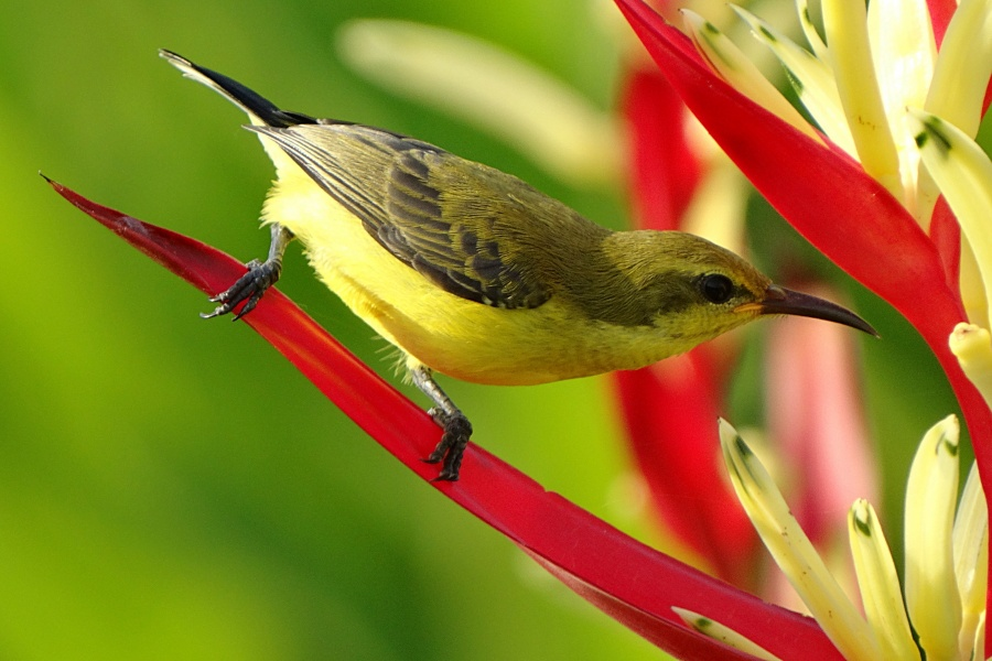ptaki i lilie