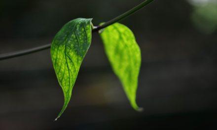 Jesteś jak roślinka – czyli jak przeżyć Wielki Post