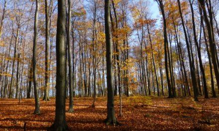 Leśny świat