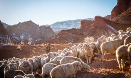 Pasterz według Serca Jezusa