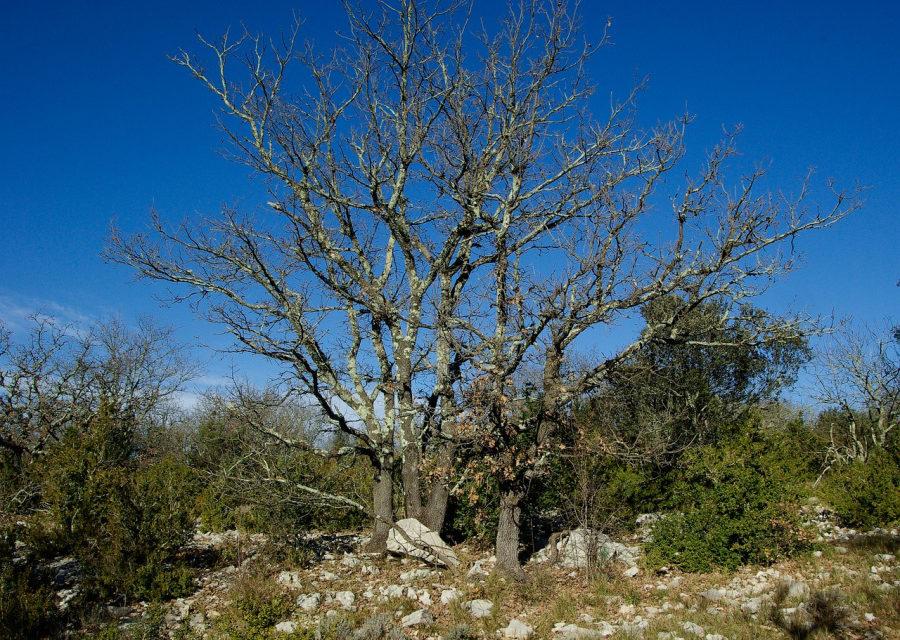 Cień krzewu cierniowego