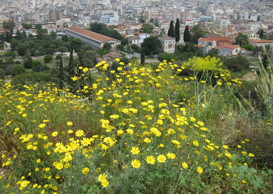 Miasto bogini Ateny