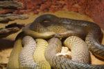 Śmiercionośne węże