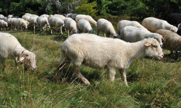 O Pasterza chodzi (Mk 6,30-34)